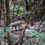 Makaken im Wald (Beweisfoto)