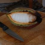 Aufgeschnittene Kakaofrucht