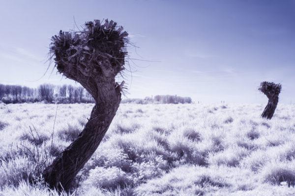 Es steht ein Baum in Hitdorf